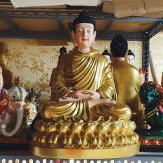 tượng Bổn Sư mẫu mới 50cm sen vàng