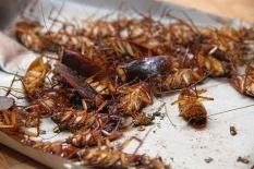 Thuốc diệt muỗi-diệt ruồi-bọ chét-kiến-gián-kiến 3 khoang rất hiệu quả