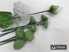 Combo 3 gương sen (Thái Lan) trang trí hoa voan, hoa giấy