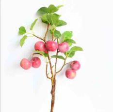 Cành táo giả cao cấp xuất khẩu, cây giả