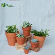 Chậu đất nung nâu trồng cây sen đá, xương rồng đủ kích thước , chậu mini đất nung nâu , terarium , vinxanh , vin xanh