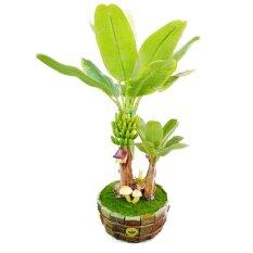 Cây chuối 2 thân Hoa 44 MINI 2080.M2 (Xanh lá)
