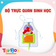 Đồ chơi cho bé trực quan sinh học ToyBox