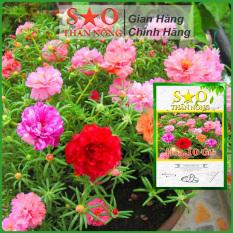Hạt giống Hoa 10 giờ thái nhiều loại màu -500 hạt -2g – Hoa mười giờ Sao Thần Nông