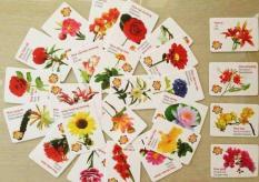 Bộ thẻ học thông minh 16 chủ đề (416 thẻ) cho bé theo phương pháp giáo dục sớm Glenn Doman