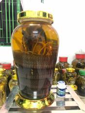 Bình 12lit – Rắn 4.5kg ngâm rượu đẳng sâm