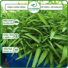 Hạt Giống Rau Muống Lá Tre TH Garden – 50 Gram – Hạt Giống Dễ Trồng Dễ Chăm Sóc, Ăn Quanh Năm, Năng Suất Cao