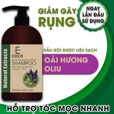 Dầu gội dược liệu giảm rụng tóc Ecoco với chiết xuất oải hương, ô liu